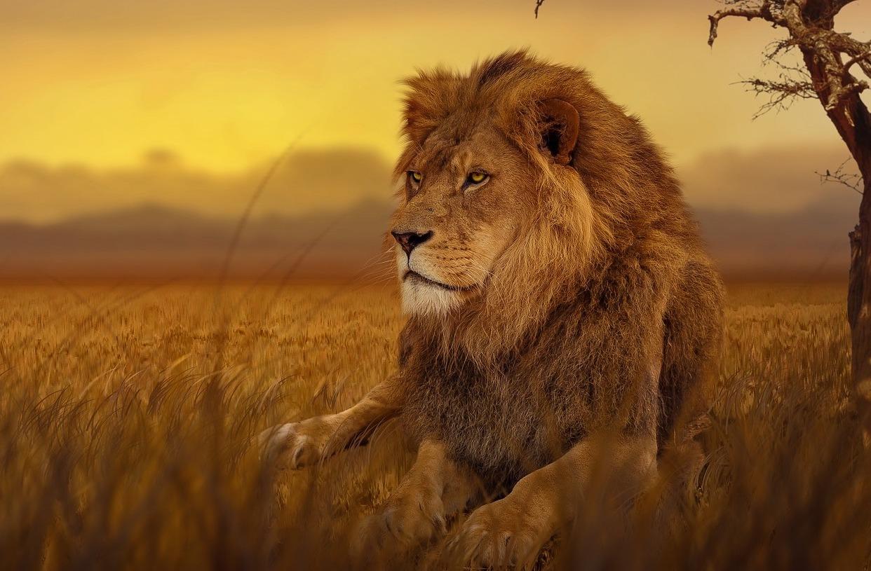 Pixabay_lion-3276692_1920_Krafttraining(Unterseite)-klein